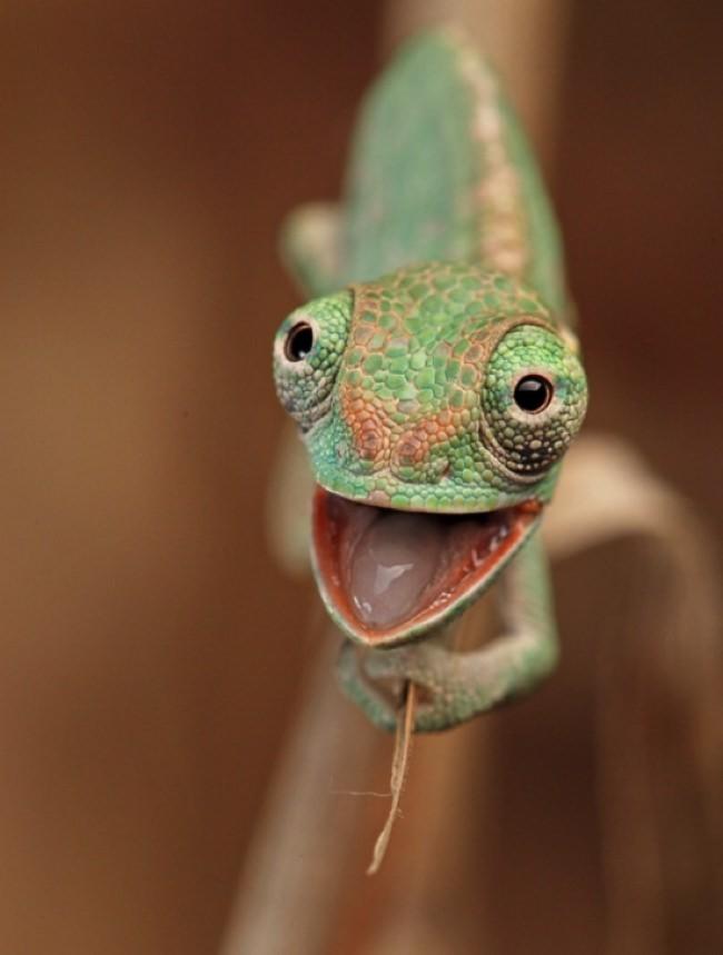 Cute Leopard Gecko Wallpaper Momentos De Felicidad Pura Captados En El Momento Preciso