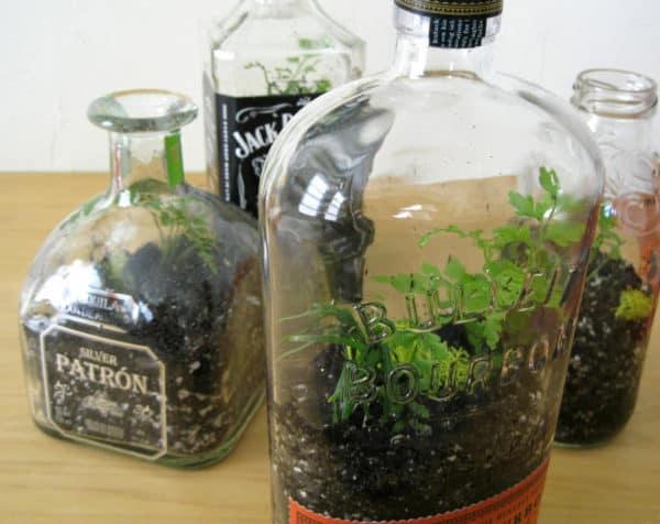 Diy Bottle Terrarium O Recyclart