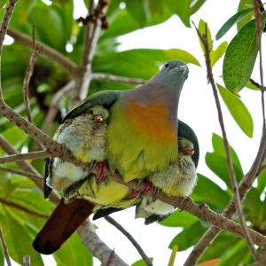 mother bird covering with wings