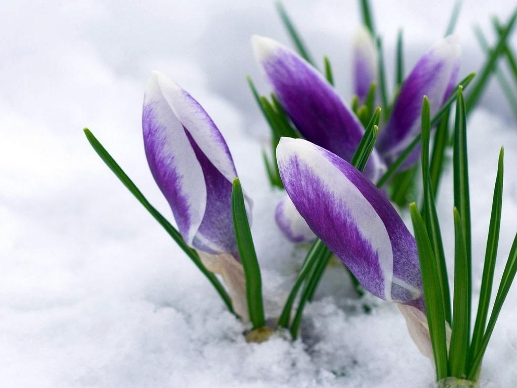 обои на рабочий стол весна природа 1652