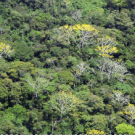 Statement from Chiapas, Mexico: REDD project is a climate mask to cover up the dispossession of the biodiversity of the peoples