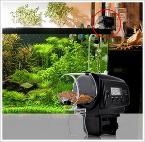 automaticfishfeeder2 Automatic Fish Feeder   let your vacations be guilt free