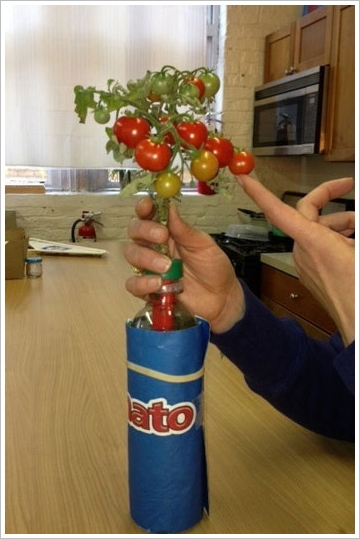 petomato2 Petomato   cool way to grow delicious stuff and recycle at the same time