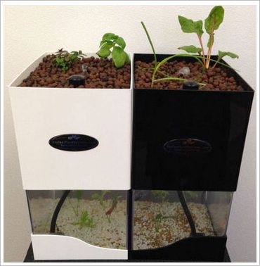 tabletopaquaponics3 TableTop Aquaponics   grow your own food the healthy sustainable way