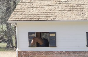 horse stable in Milton GA