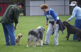Woodstock may have a new dog park