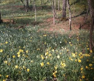 Gibbs Gardens Cherokee County GA