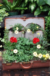 Suitcase planter