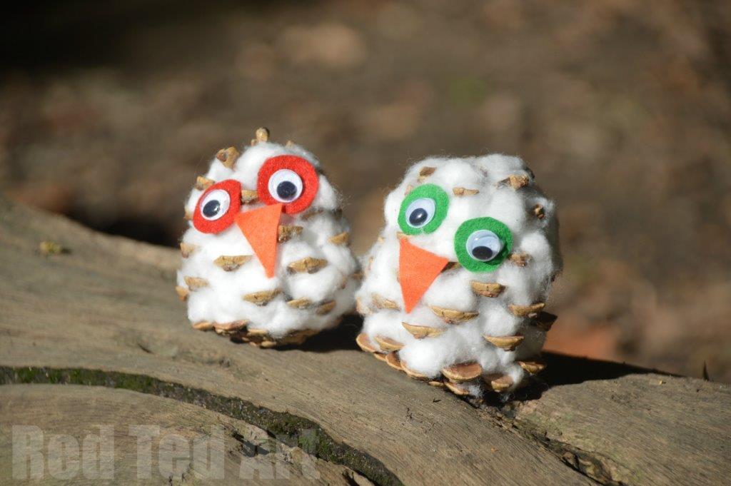 pine cone snowy owl