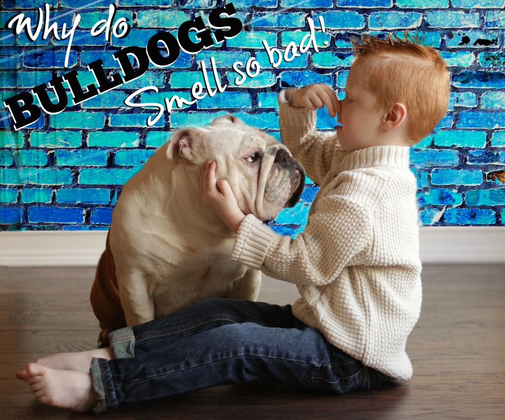 Dazzling Super Stinky English Dog Smells Like Fish After Spay Dog Smells Like Fish After Being Outside Why Does My Bulldog Smell Reasons Remedies bark post Dog Smells Like Fish