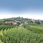 brda vineyard 2