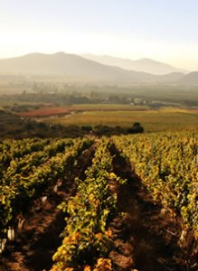 vineyards and mountains 3