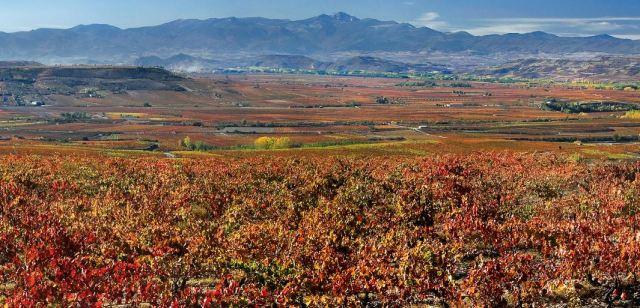 Rioja Panorama