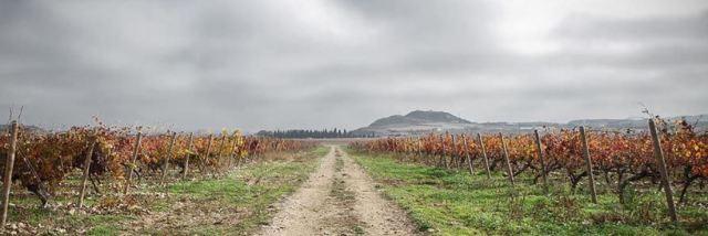 Carlos Serres Vineyards
