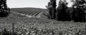 Mas Fi Vineyards