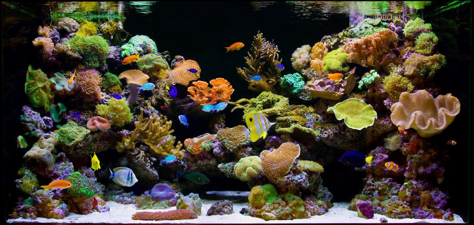 3d Om Live Wallpaper How To Tell If Your Saltwater Reef Aquarium Sucks