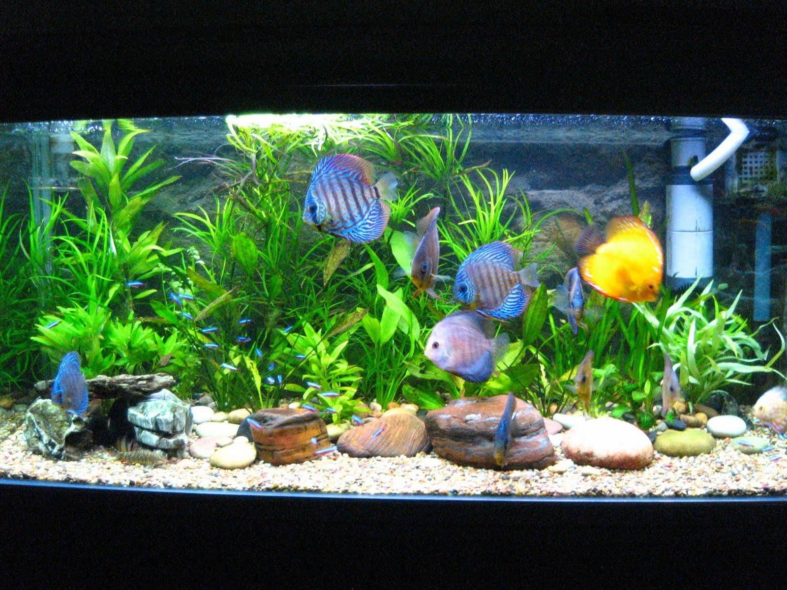 fish diseases in freshwater aquariums google_adsense_in_post