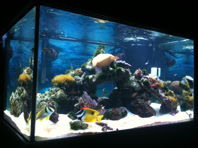 Fish aquarium 200 gallon 200 gallon fish only system for 200 gallon fish tank dimensions