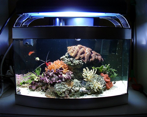 how to remove fish from tank