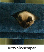 Kitty Skyscraper