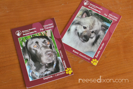 Animal Therapy Cards