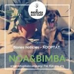 Noa & Bimba Adoptat