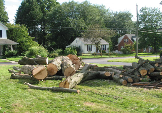 18_Johns-creek-tree-service-and-removal-companies