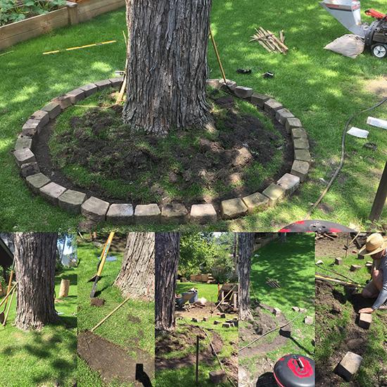 blog-treewring3