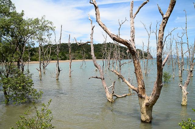 Bako - Mangrove