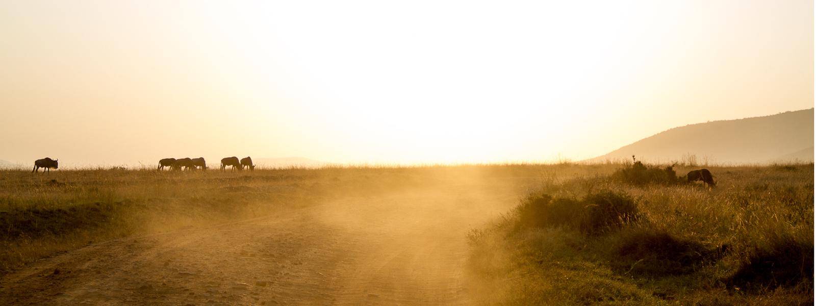 Con el sol pegado a los talones por el Maasai Mara