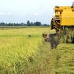 La Misión Agro Venezuela no será efectiva si no se respeta la propiedad privada, dijo el profesor del IESA, Carlos Machado Allison.