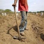La escasez de insumos agrícolas compromete el repunte de la producción nacional.