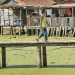 Los palafitos del lago de Maracaibo parecen sembrados en grama, pero el olor putrefacto recuerda que se trata de la lemna.