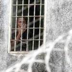 Durante los últimos días se En la tarde de ayer, mientras se realizaba la visita en la cárcel de Tocuyito, una balacera sorprendió a los presentes.