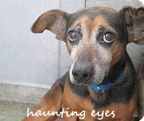 Haunting photo triggers rescue of terrified shelter dogs