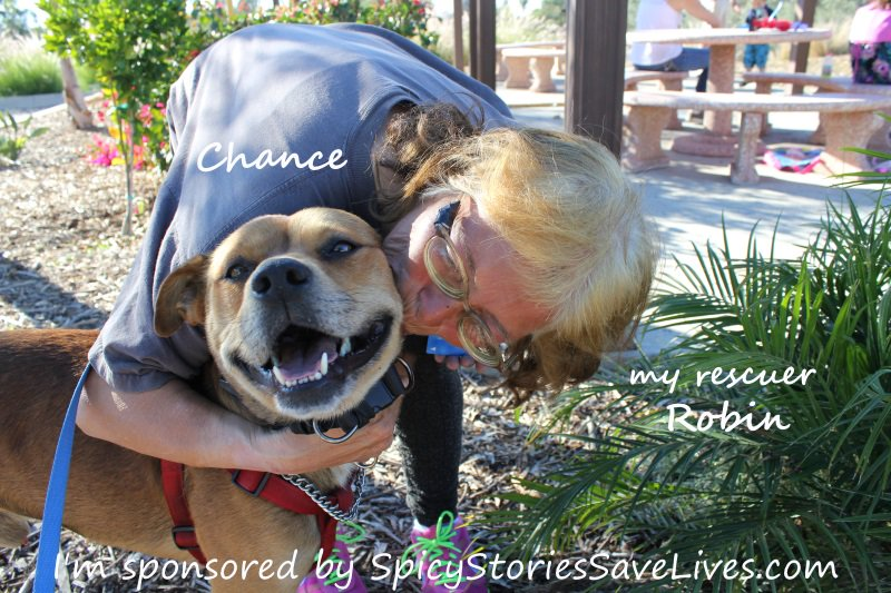 Abused dog and his homeless rescuer on the path to new lives