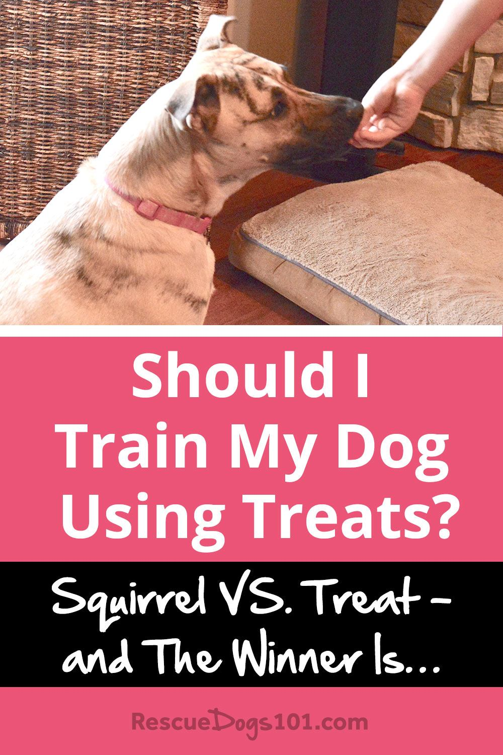 Should I Train My Dog With Treats Rescue Dogs 101
