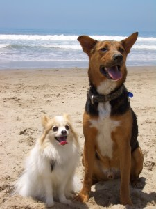 Chance's first beach partner, petite and older brother, Filbert
