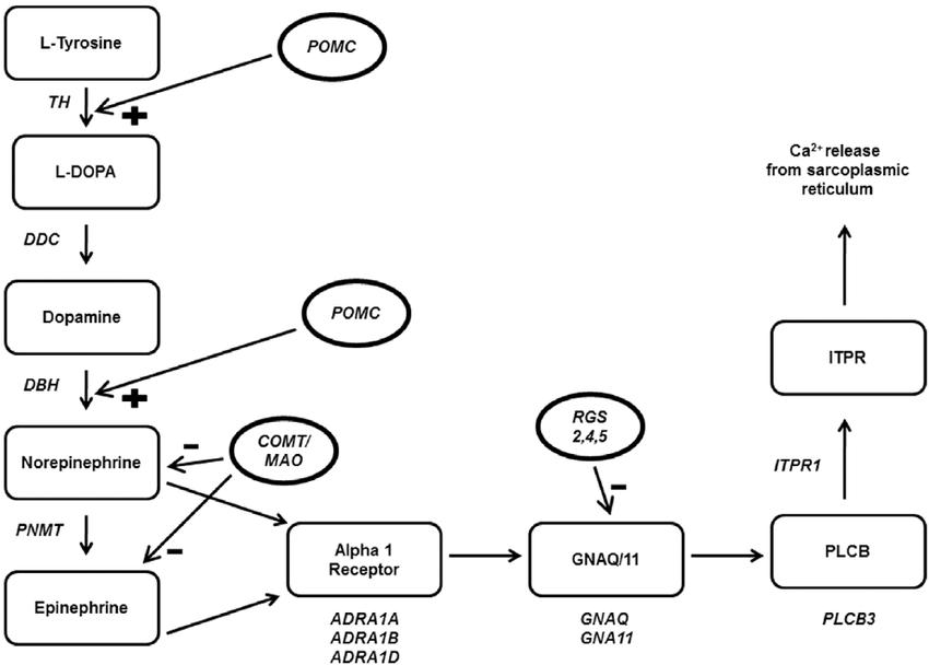 diagram of nucleotide gene