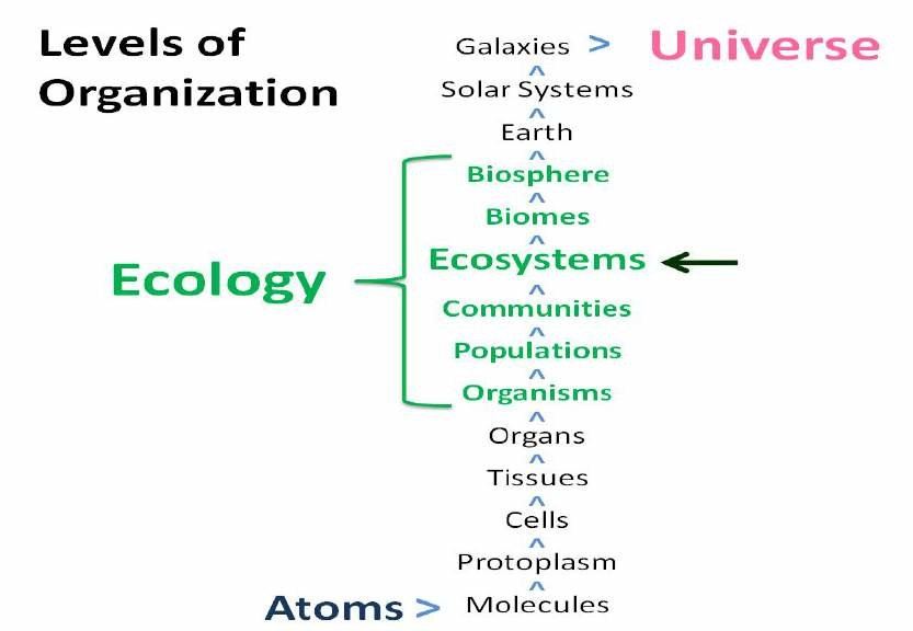 Levels of Organization of Ecology, highlighting ecosystems (Credit