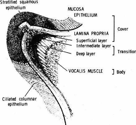 singing voice diagram