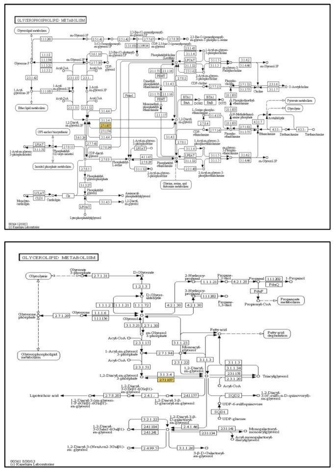 Figure S7 Glycerophospholipid metabolism (upper) and Glycerolipid