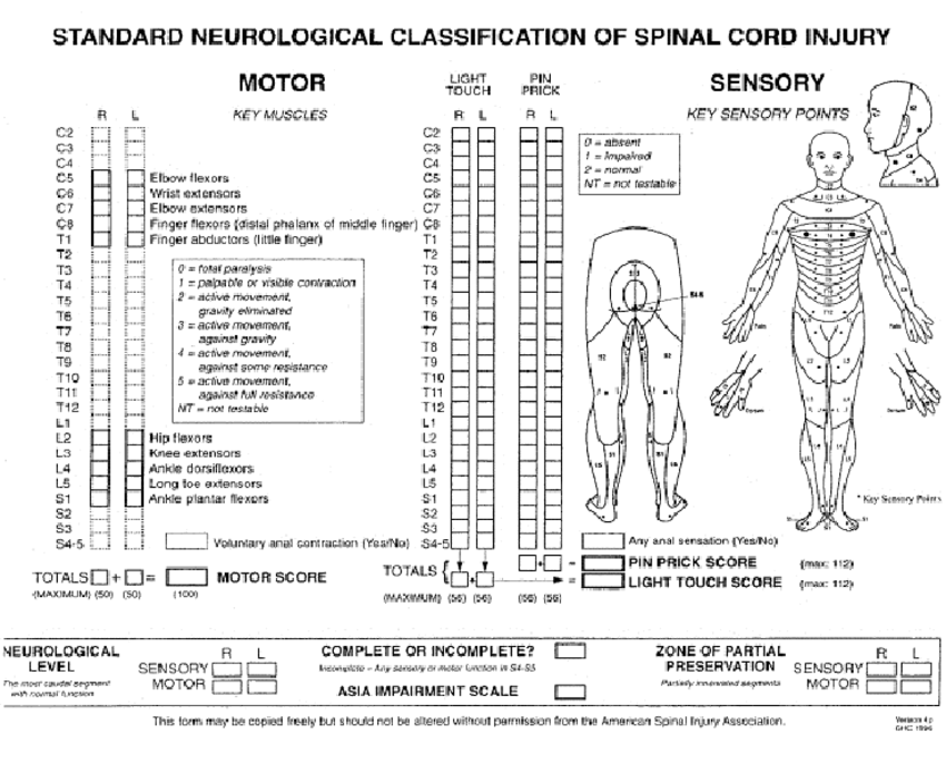 full spinal cord diagram