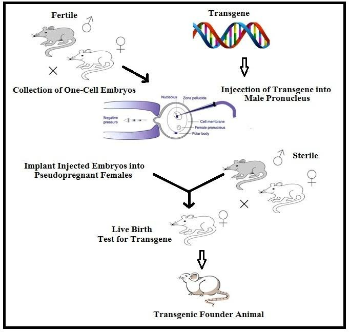 DNA microinjection method of producing transgenic animals Download