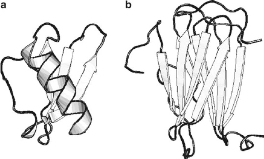 protei structure diagram