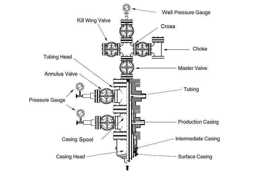 pine tree parts diagram