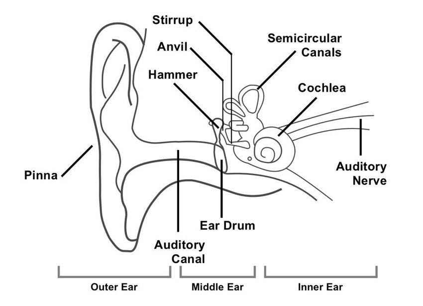 1 diagram showing the structure of the human ear