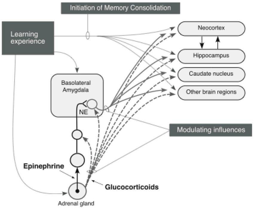 memory schematic model