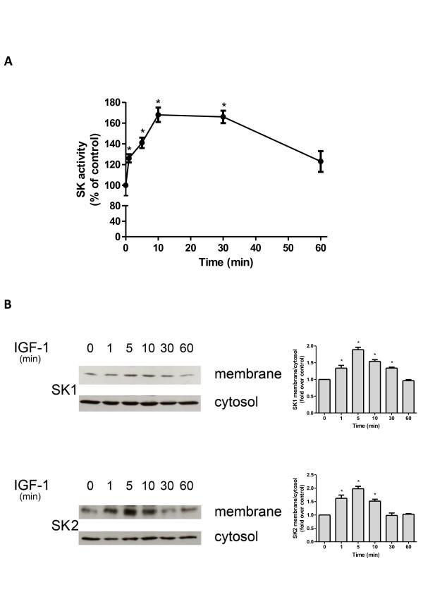 Effect of insulin-like growth factor-1 on sphingosine kinase
