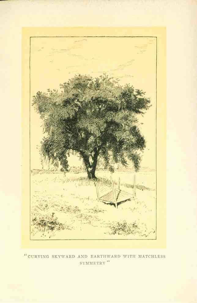 The Elm Tree, Six Tees (1903) Download Scientific Diagram